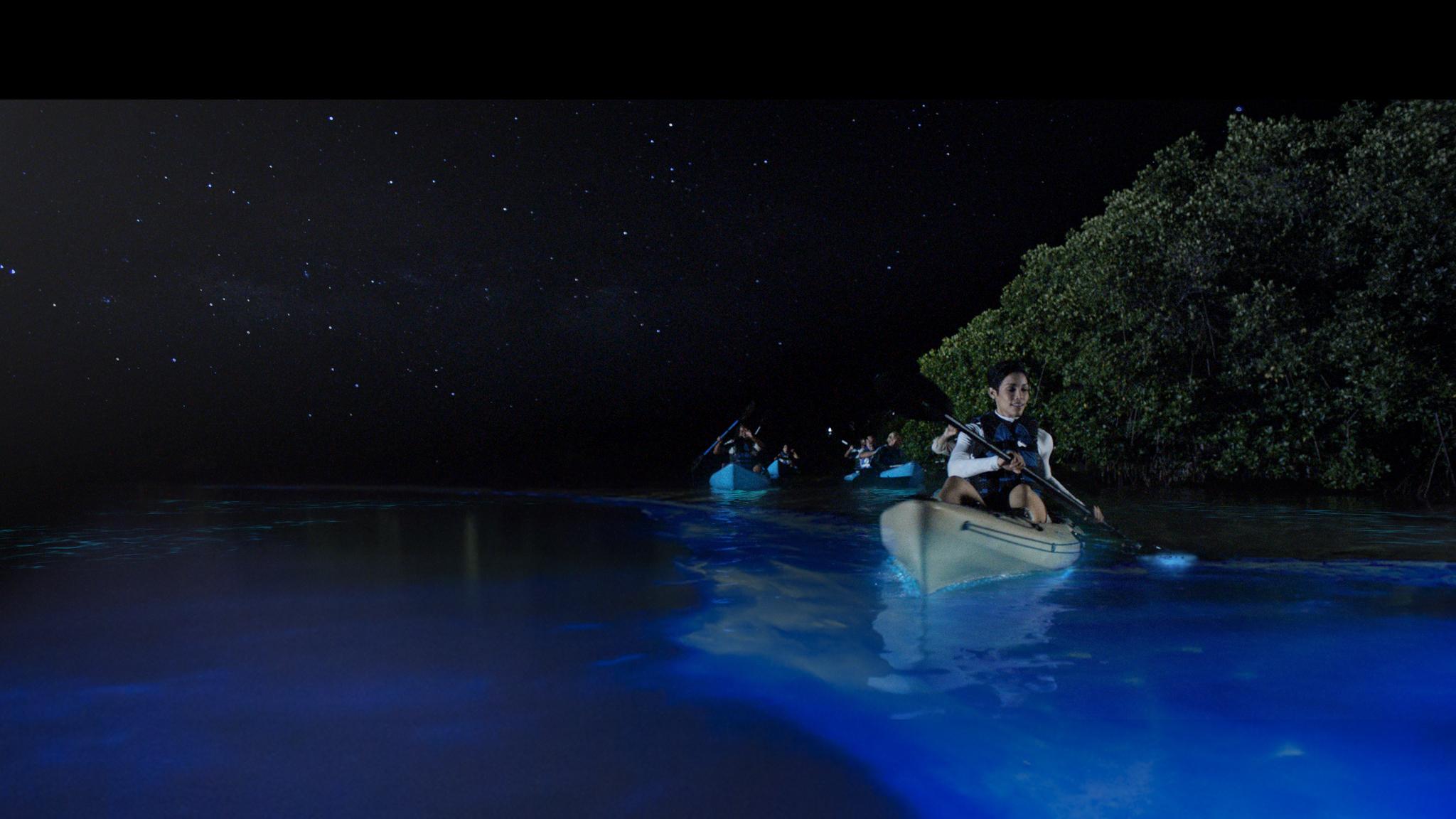 Bioluminiscent bay Vieques