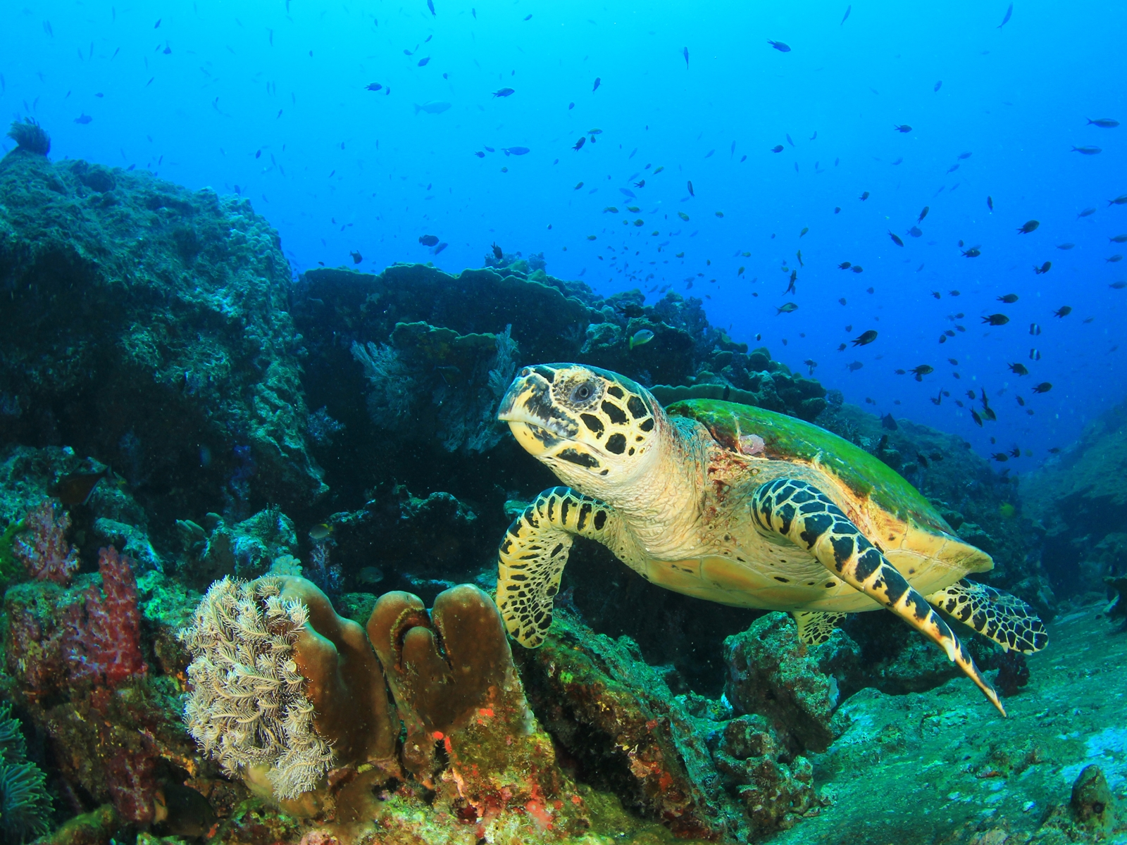 Sea-Turtle-Copyright-Rich-Carey
